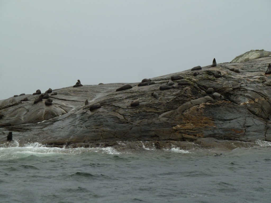 view of rocks with seals in clouds