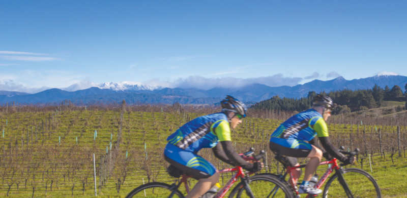 two bicyclists riding past vineyard