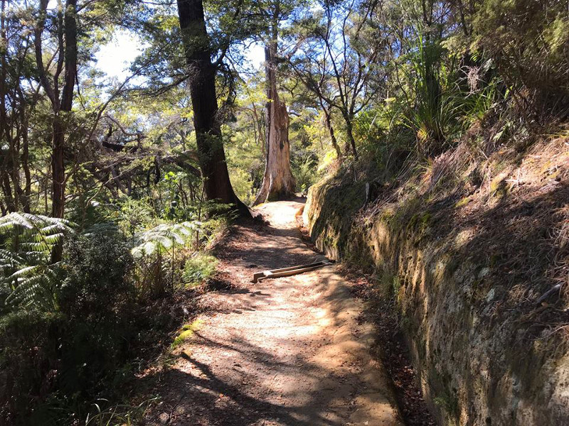 walking track in Abel Tasman National Park